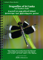 Dragonflies of Sri Lanka and South India