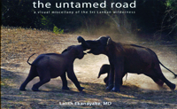 The untamed road